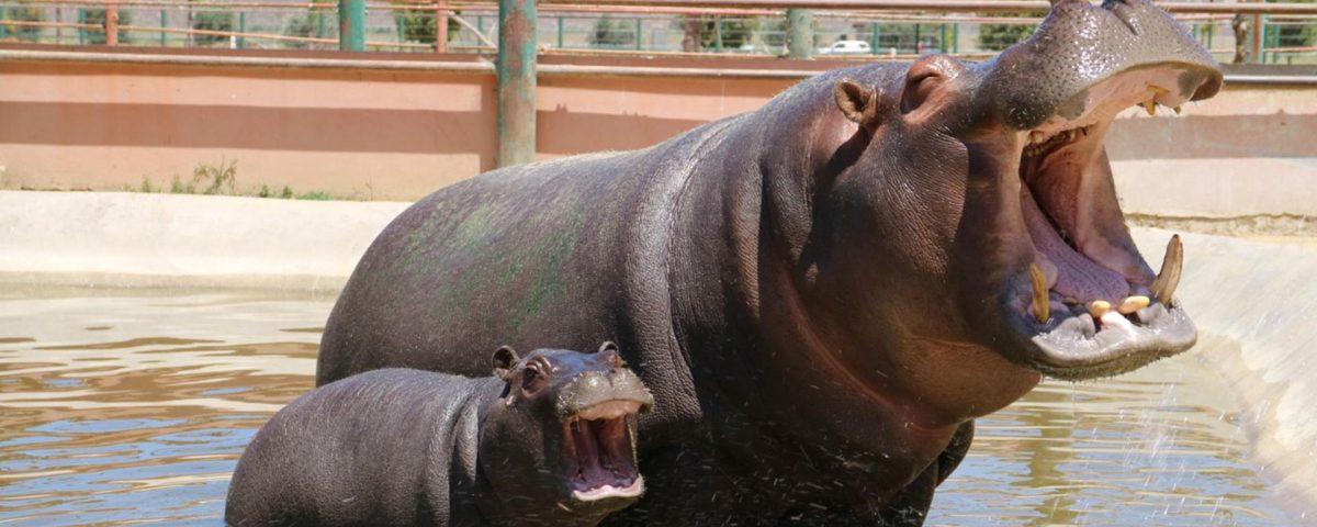 Parque Zoologico Jersey Ensenada